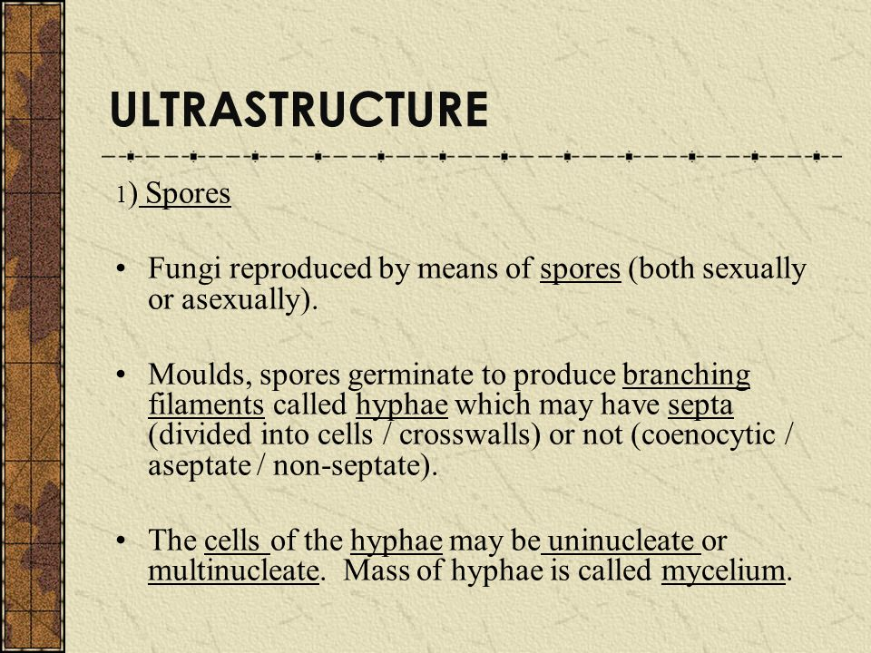 ULTRASTRUCTURE 1) Spores. Fungi reproduced by means of spores (both sexually or asexually).