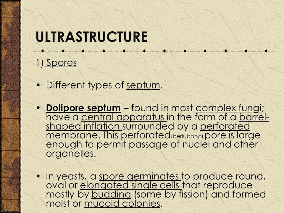 ULTRASTRUCTURE 1) Spores Different types of septum.