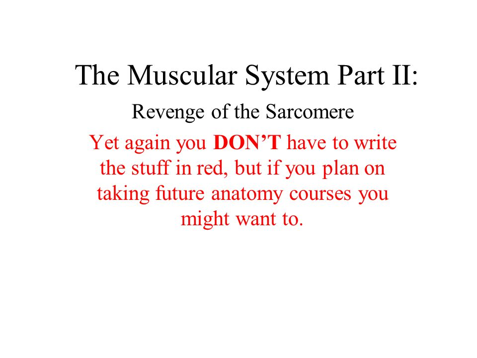 The Muscular System Part II: