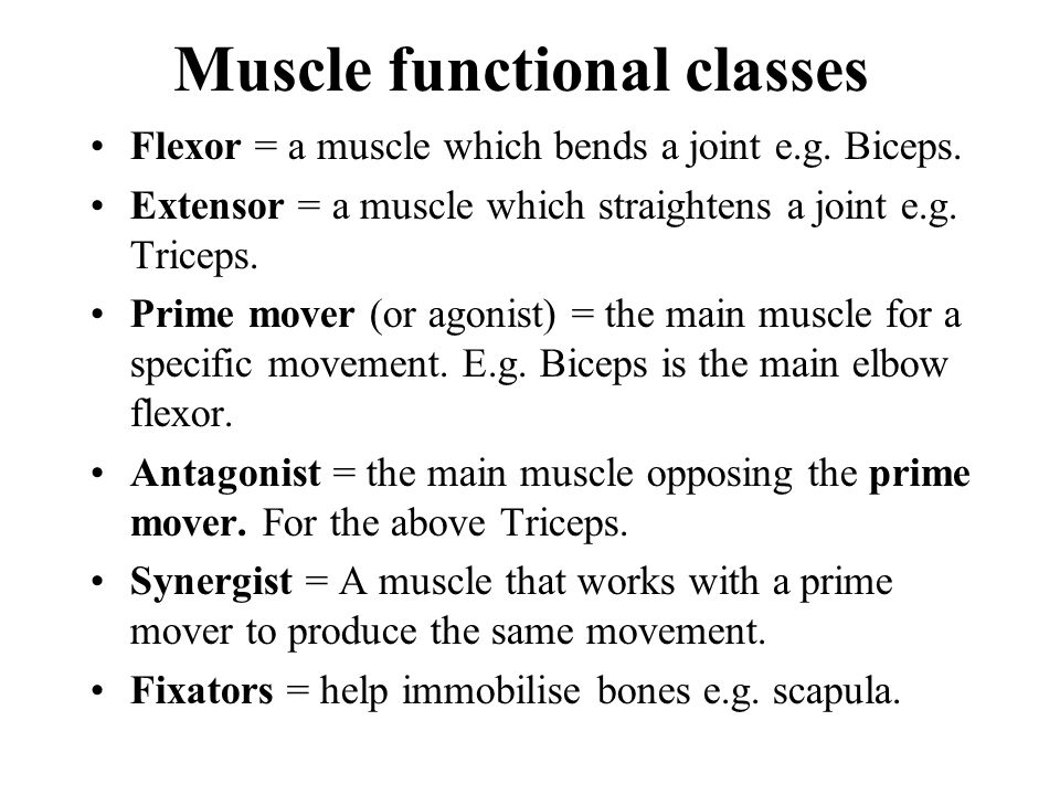Muscle functional classes