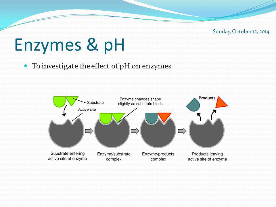 Enzymes & pH To investigate the effect of pH on enzymes