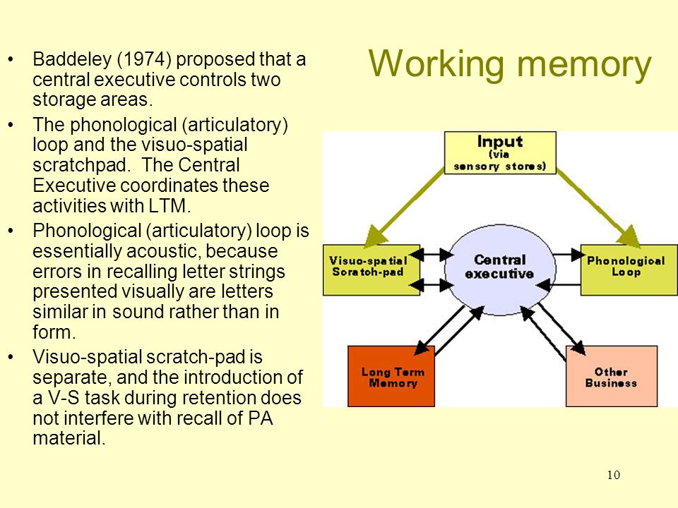 Working memory Baddeley (1974) proposed that a central executive controls two storage areas.