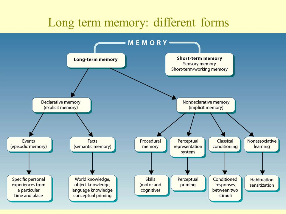 Long term memory: different forms