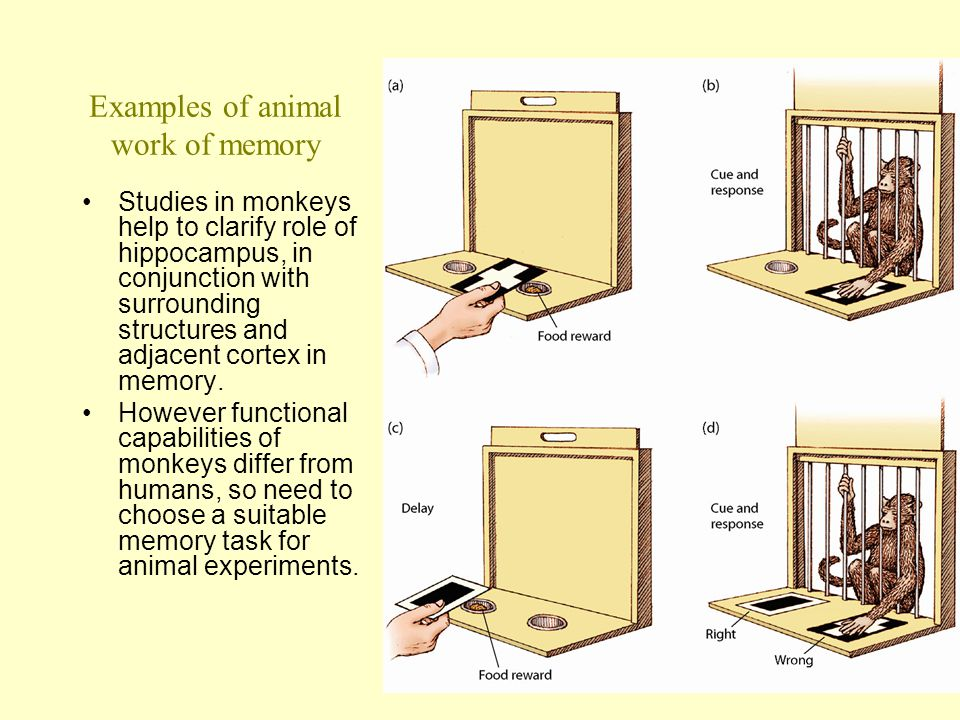 Examples of animal work of memory