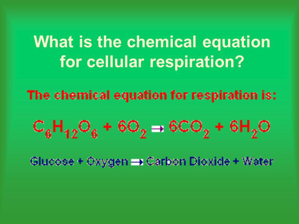 What is the chemical equation for cellular respiration
