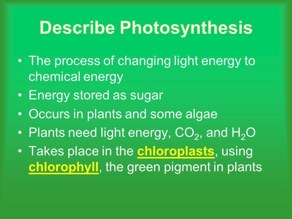 Describe Photosynthesis