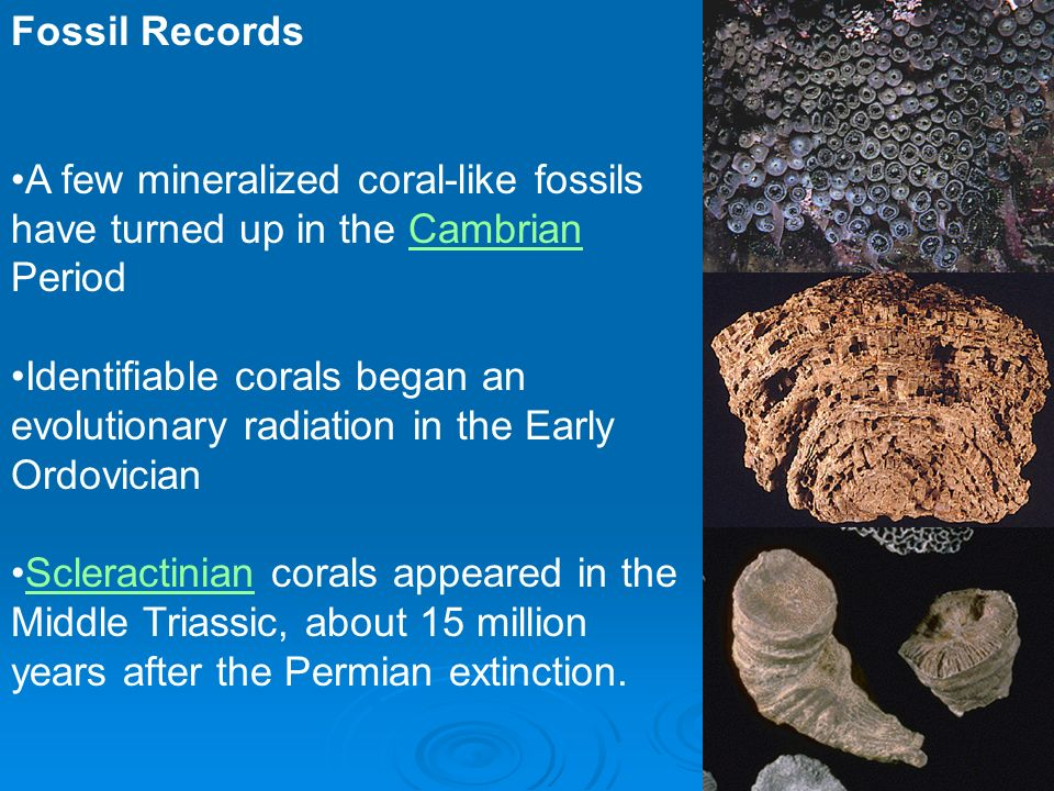 Fossil Records A few mineralized coral-like fossils have turned up in the Cambrian Period.
