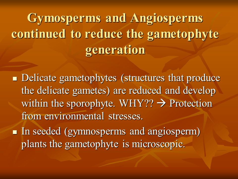 Gymosperms and Angiosperms continued to reduce the gametophyte generation