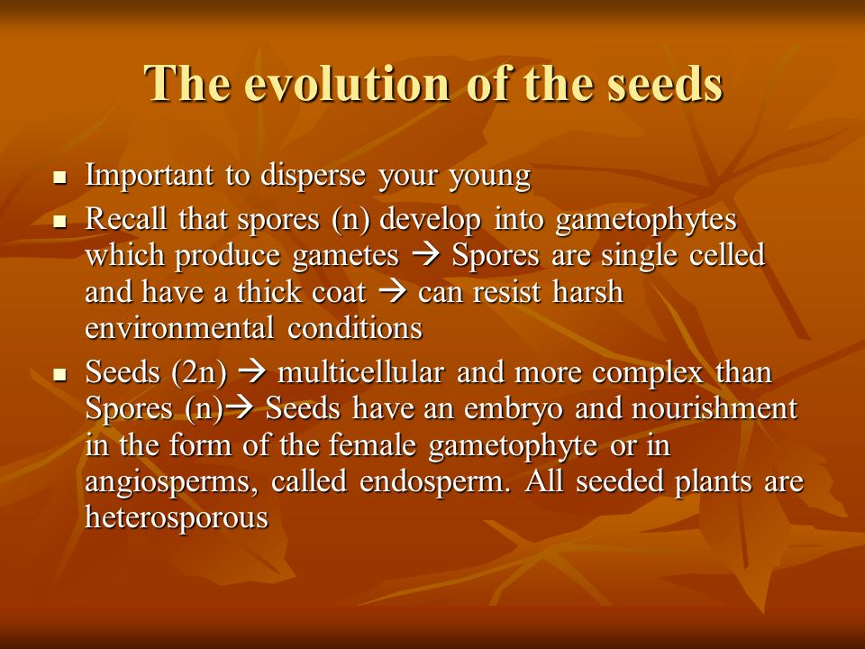 The evolution of the seeds