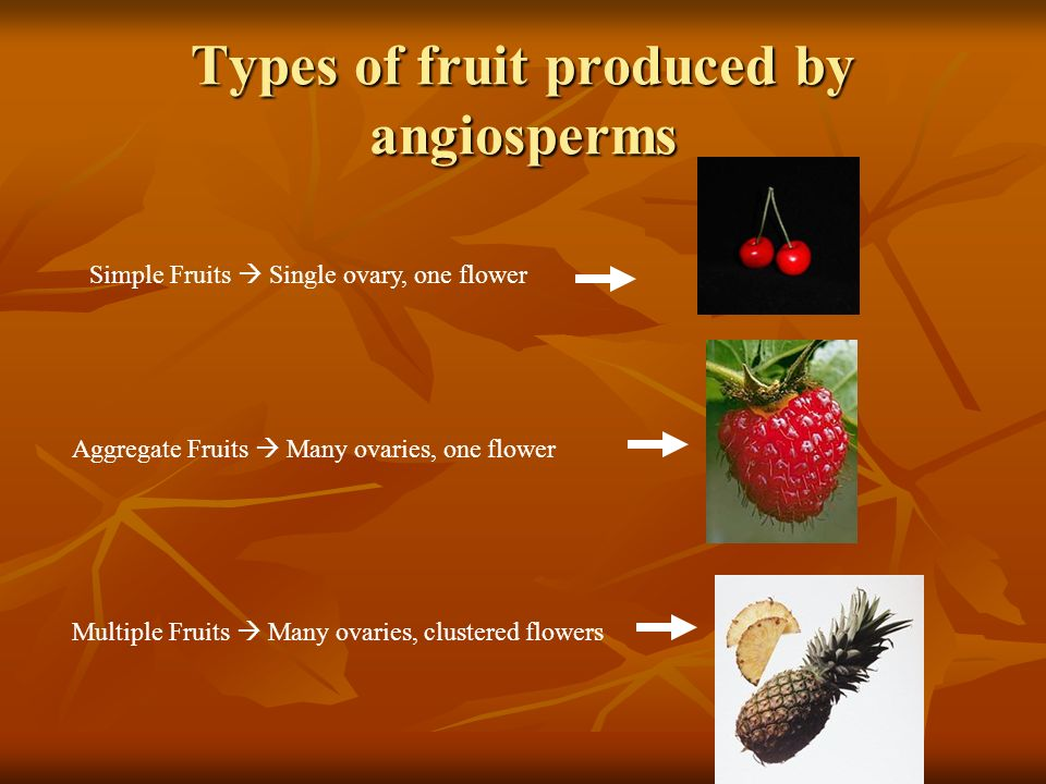 Types of fruit produced by angiosperms