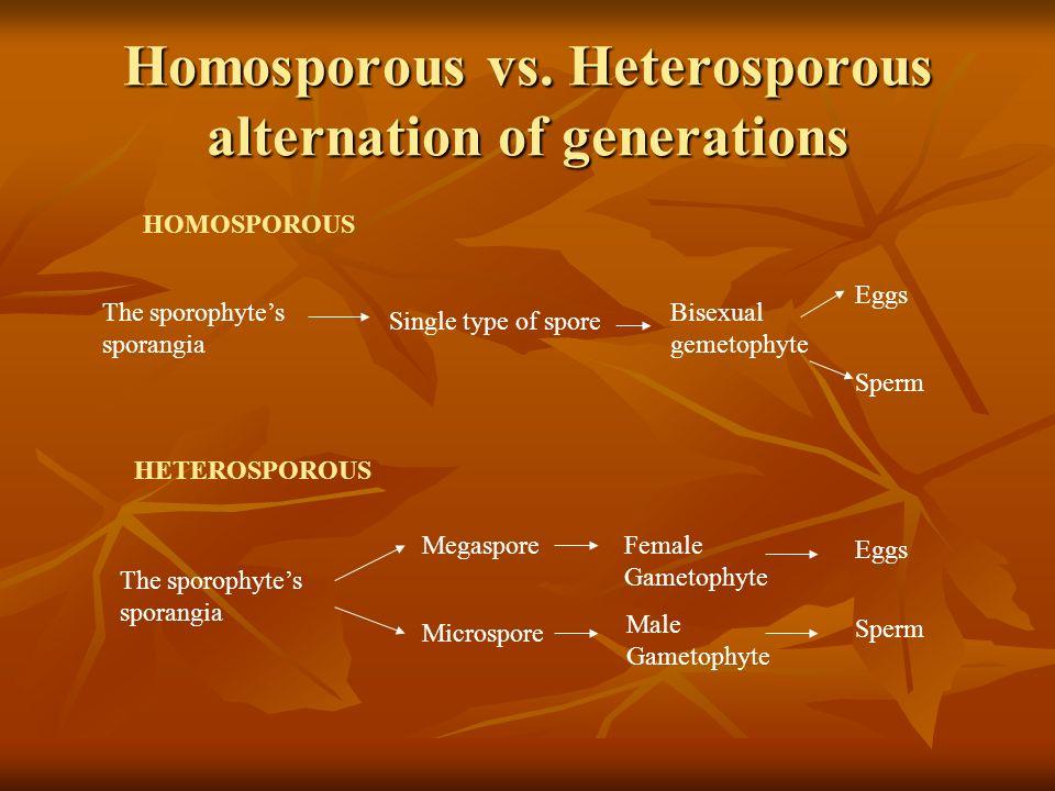 Homosporous vs. Heterosporous alternation of generations