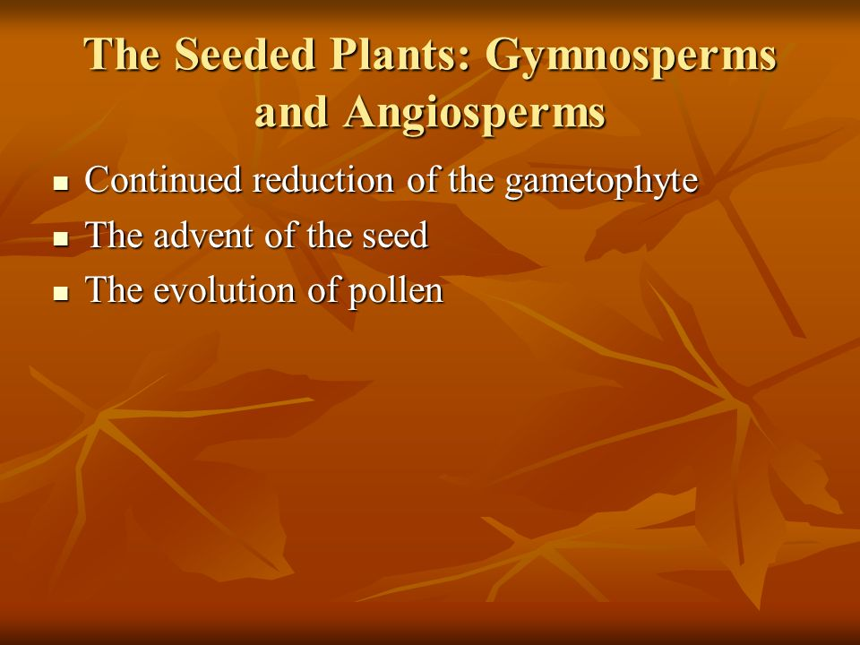The Seeded Plants: Gymnosperms and Angiosperms