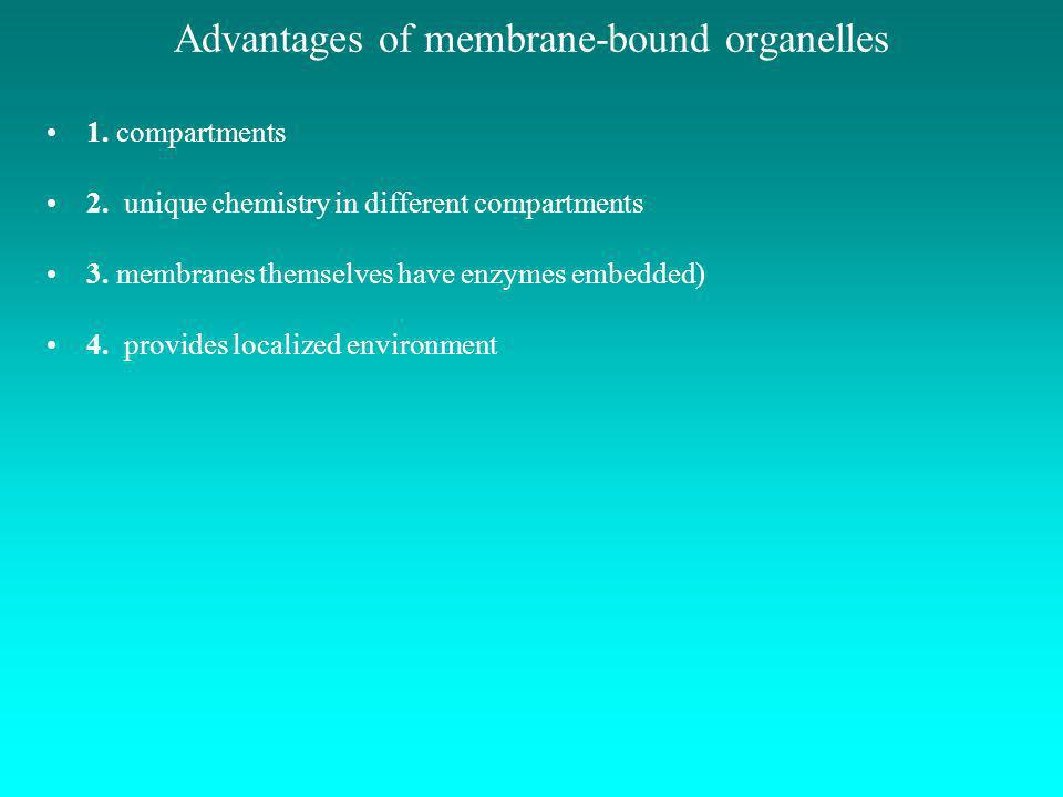 Advantages of membrane-bound organelles