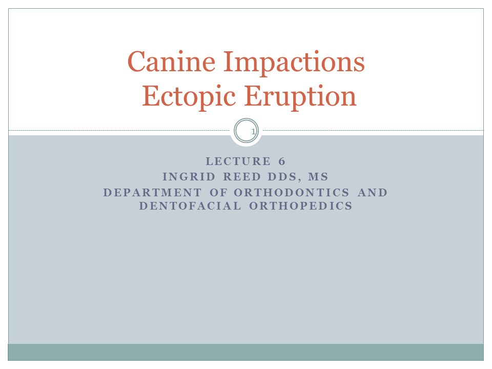 Canine Impactions Ectopic Eruption