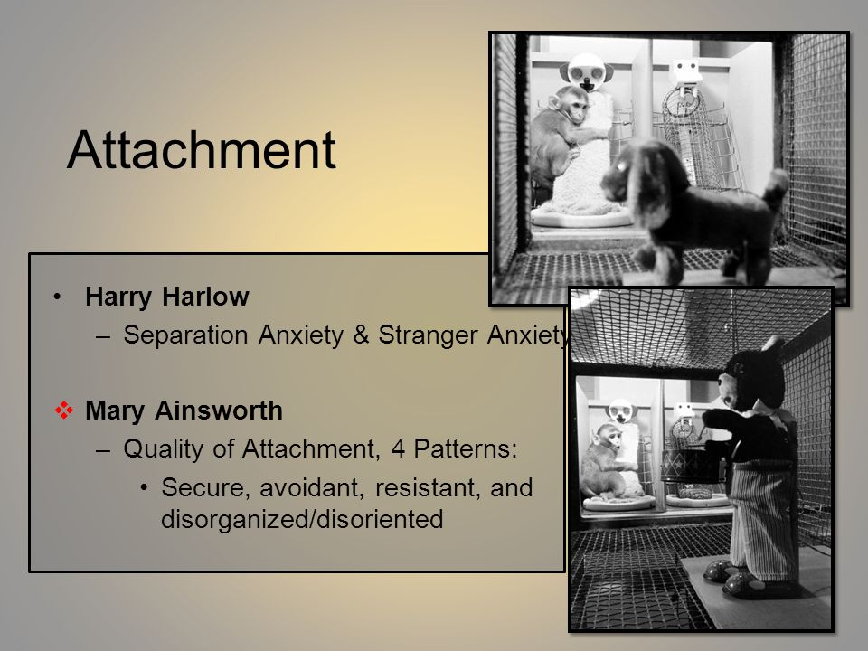 Attachment Harry Harlow Separation Anxiety & Stranger Anxiety