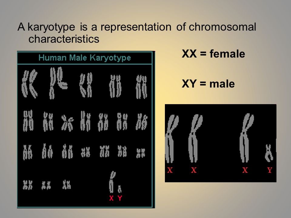A karyotype is a representation of chromosomal characteristics