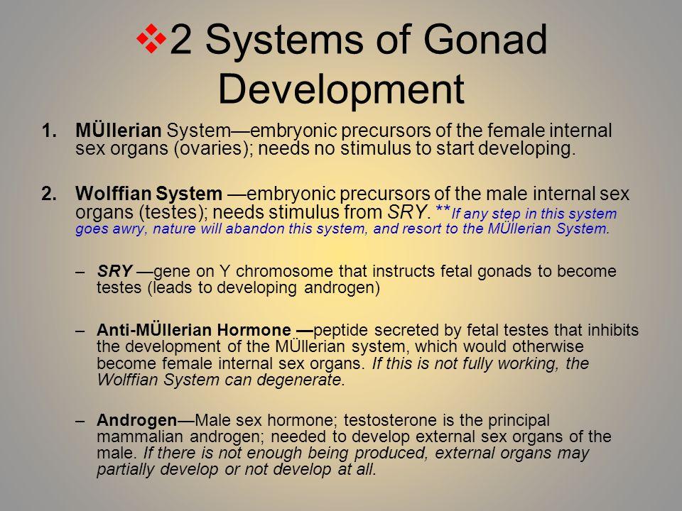 2 Systems of Gonad Development