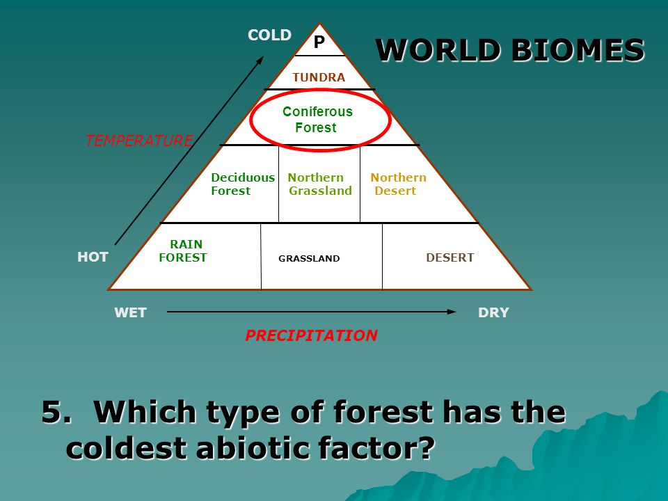 5. Which type of forest has the coldest abiotic factor