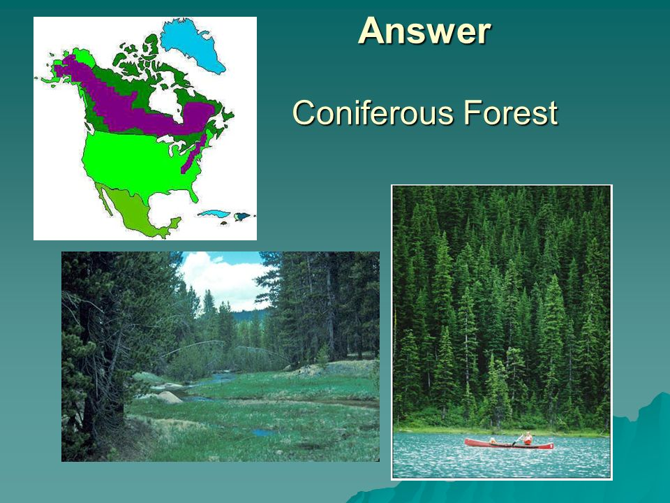 Answer Coniferous Forest