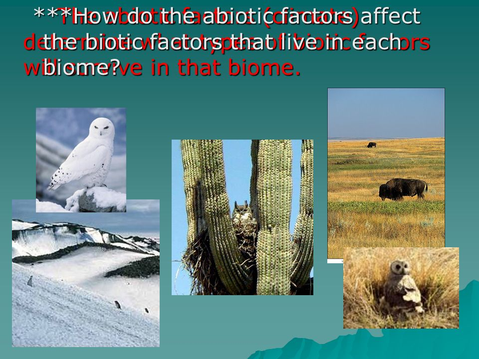 The abiotic factors (climate) determine what types of biotic factors will survive in that biome.