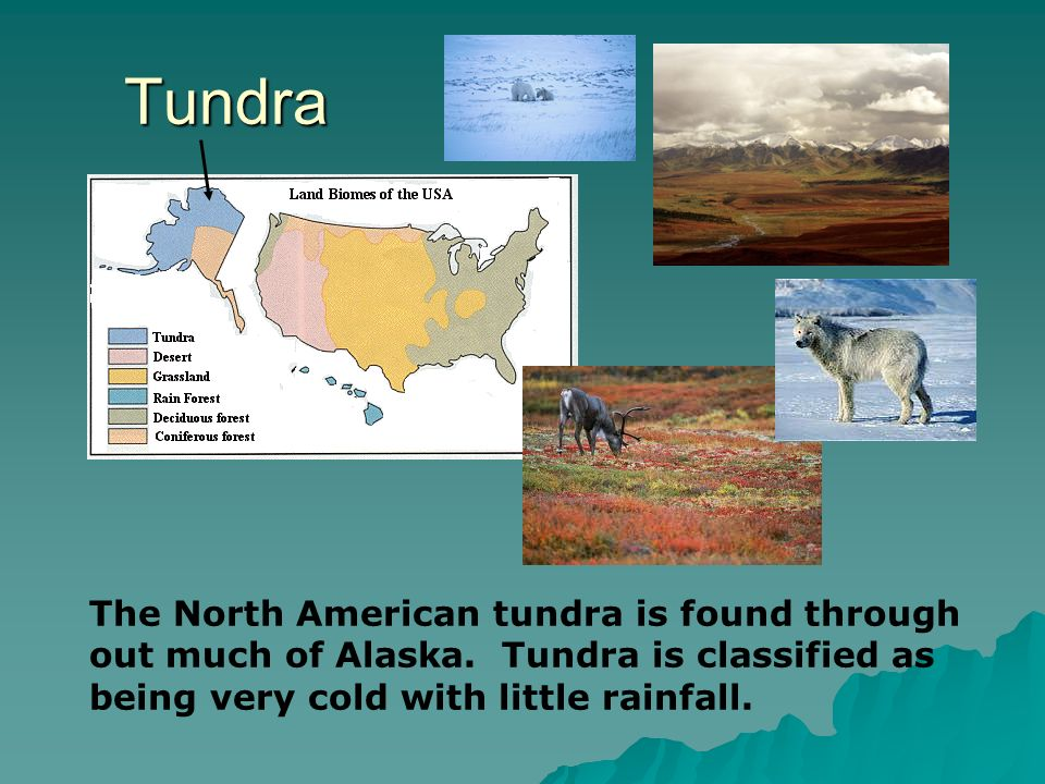 Tundra The North American tundra is found through out much of Alaska.