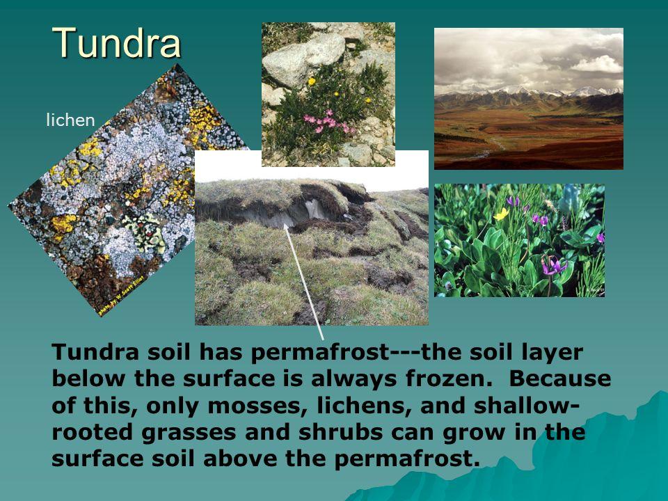 Tundra lichen.