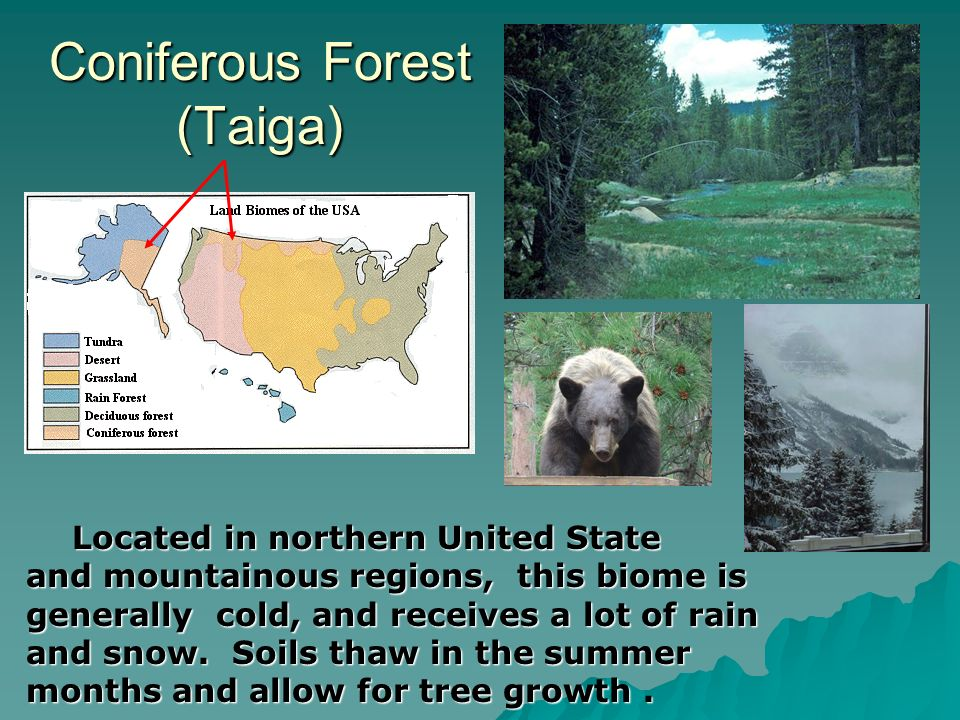 Coniferous Forest (Taiga)