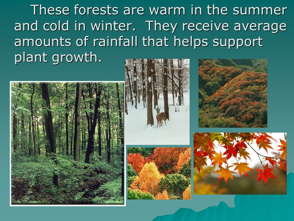 These forests are warm in the summer and cold in winter