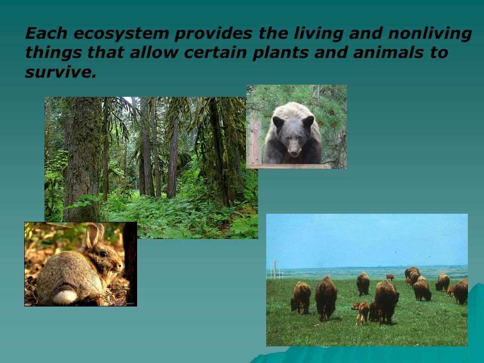 Each ecosystem provides the living and nonliving things that allow certain plants and animals to survive.