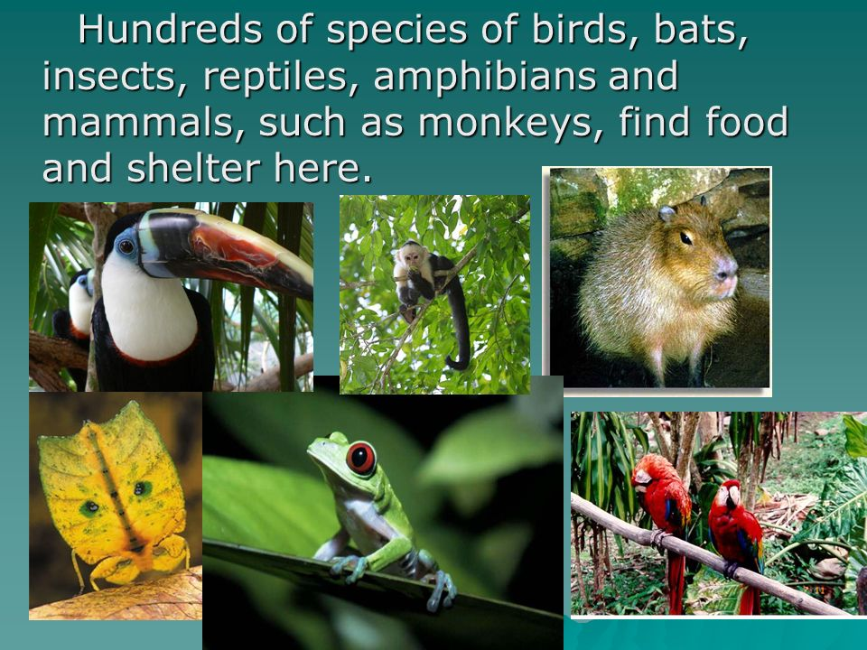 Hundreds of species of birds, bats, insects, reptiles, amphibians and mammals, such as monkeys, find food and shelter here.