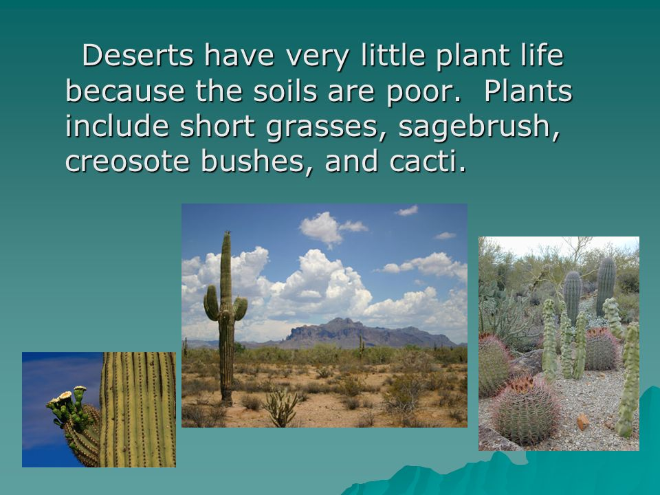 Deserts have very little plant life because the soils are poor