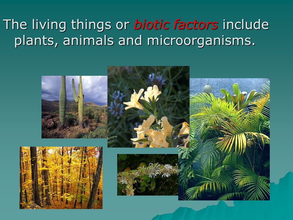 The living things or biotic factors include plants, animals and microorganisms.