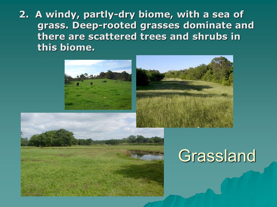 2. A windy, partly-dry biome, with a sea of grass