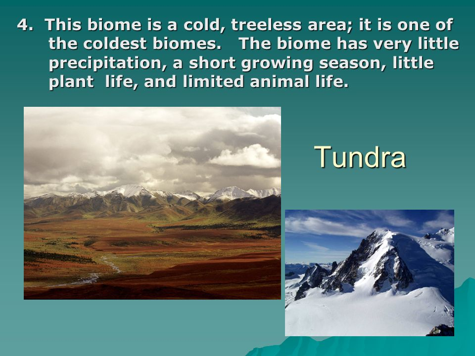 4. This biome is a cold, treeless area; it is one of the coldest biomes. The biome has very little precipitation, a short growing season, little plant life, and limited animal life.