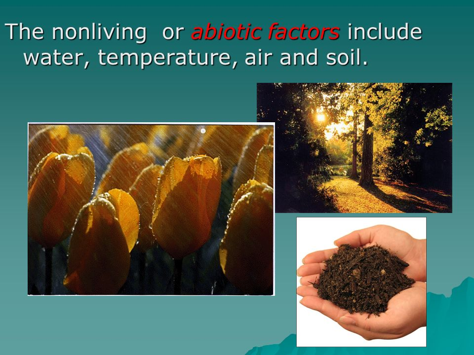 The nonliving or abiotic factors include water, temperature, air and soil.