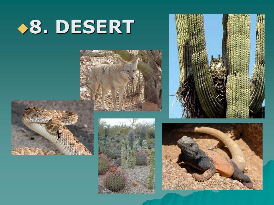 8. DESERT