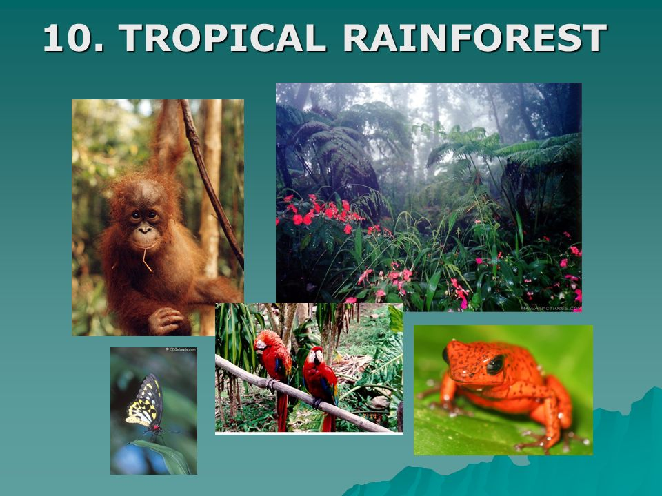 10. TROPICAL RAINFOREST