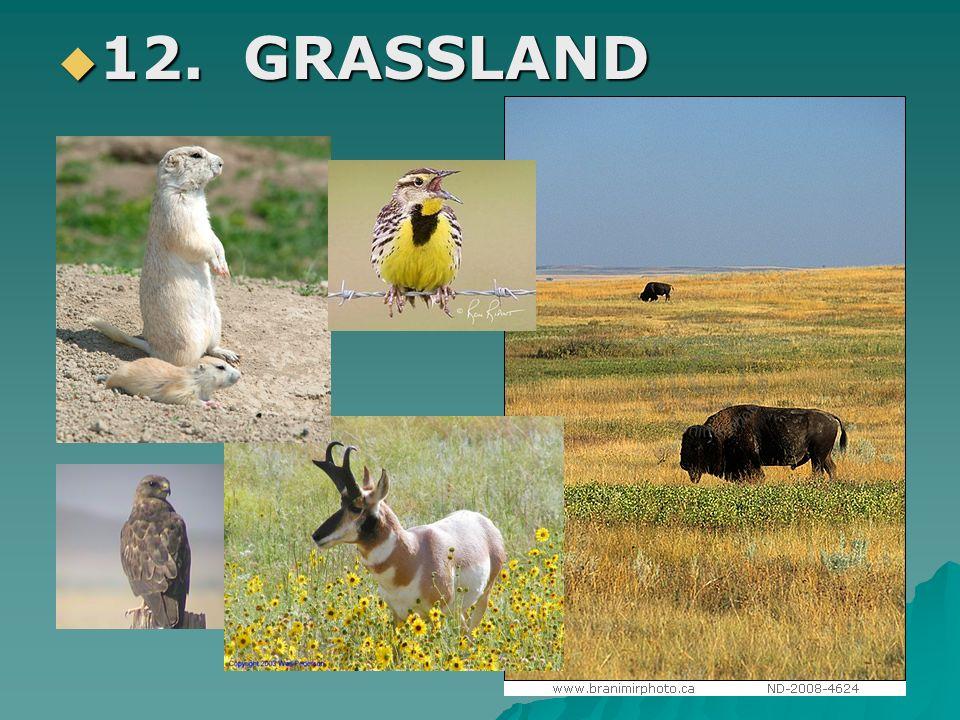 12. GRASSLAND