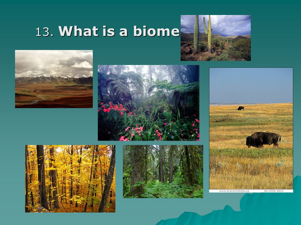 13. What is a biome