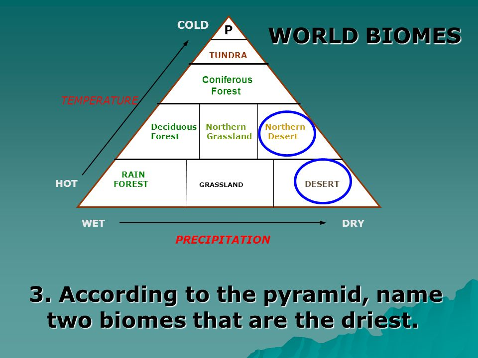 3. According to the pyramid, name two biomes that are the driest.
