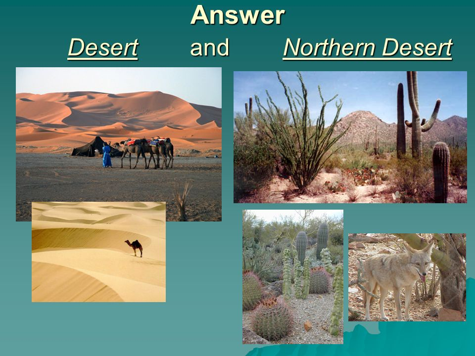 Answer Desert and Northern Desert