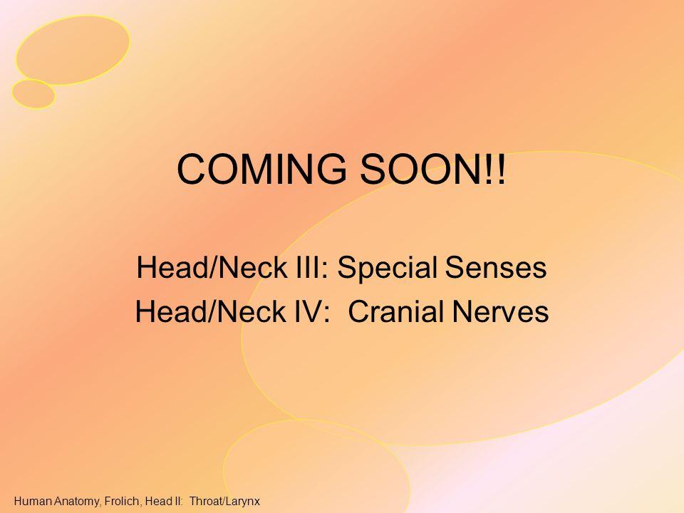 Head/Neck III: Special Senses Head/Neck IV: Cranial Nerves