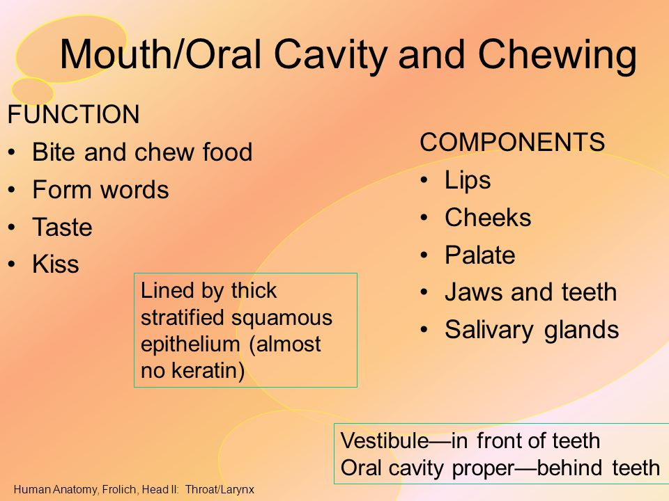 Mouth/Oral Cavity and Chewing