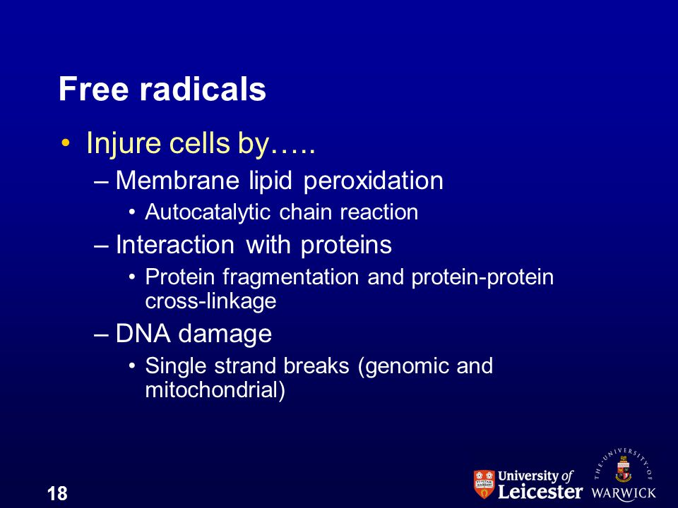 Free radicals Injure cells by….. Membrane lipid peroxidation