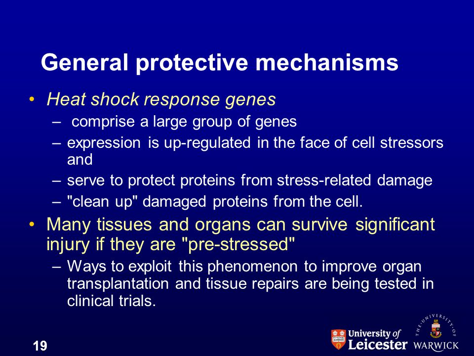 General protective mechanisms