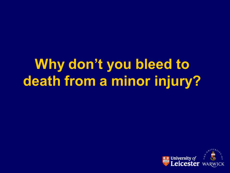 Why don't you bleed to death from a minor injury