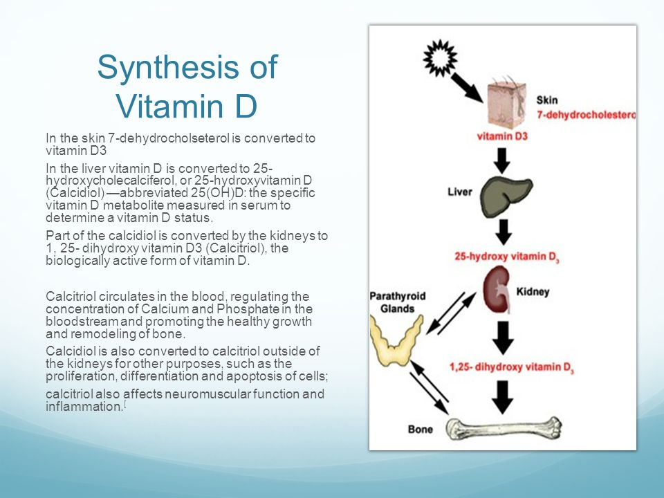 Synthesis of Vitamin D In the skin 7-dehydrocholseterol is converted to vitamin D3.