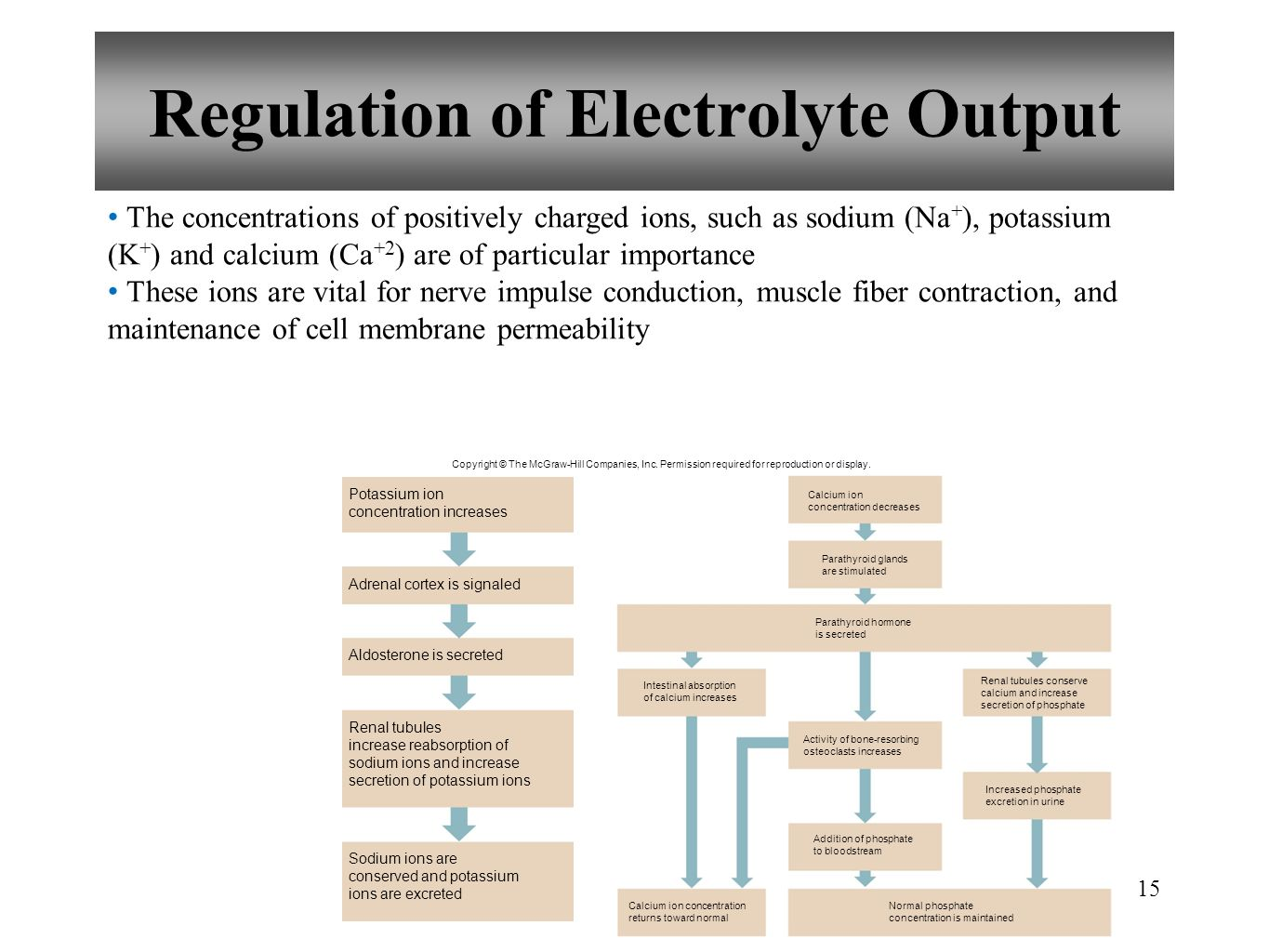 Regulation of Electrolyte Output