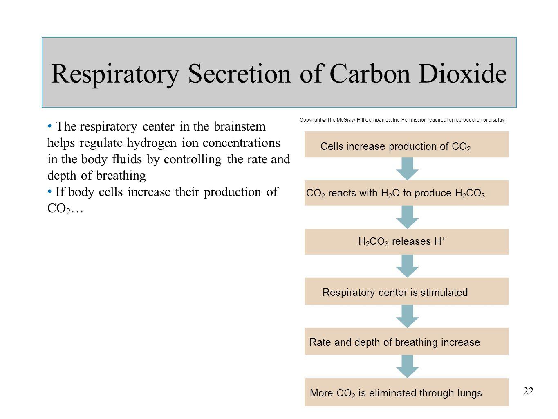 Respiratory Secretion of Carbon Dioxide
