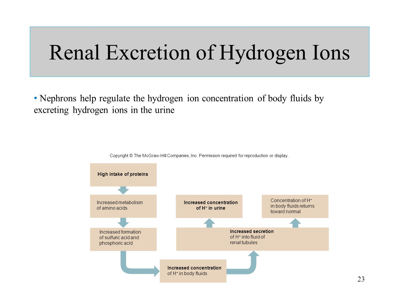 Renal Excretion of Hydrogen Ions